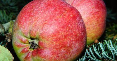 Die 5 besten natürlichen Appetitzügler!