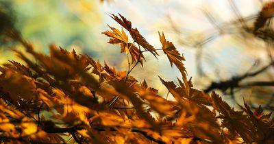 Rüste dein zu Hause für sonnige Herbsttage