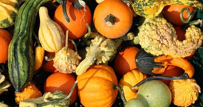Kürbis - nicht nur im Herbst gesund