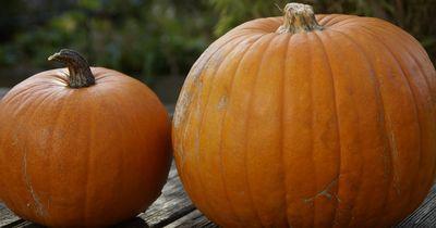 Für die kalten Herbsttage ist das das beste Rezept überhaupt.