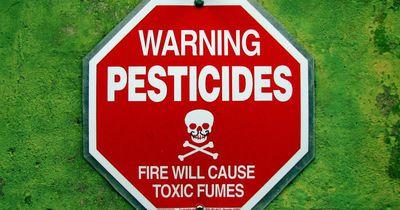Chemie zum Frühstück – wie gefährlich sind Pestizide?