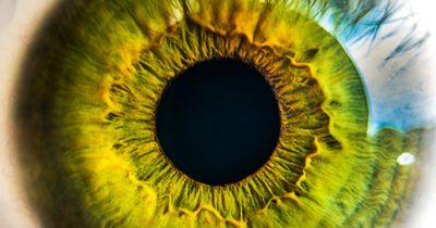 Vorsicht Augengrippe