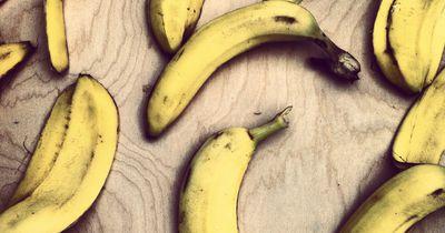 Stirbt die Banane aus?