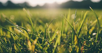 So entfernst du hartnäckige Grasflecken im Handumdrehen
