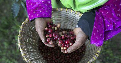 Fairtrade ist doch gar nicht so gut - jedenfalls nicht für alle!