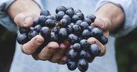 Weintrauben – mit oder ohne Kerne?