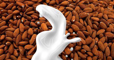 Einfach lecker: Mandelmilch selbgemacht