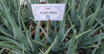 Warum wir alle Aloe Vera zu Hause haben sollten!