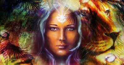 Dein spirituelles Begleit-Tier gibt dir Kraft!