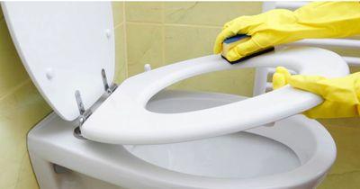 Mit diesem Hausmittel wird deine Toilette blitzblank