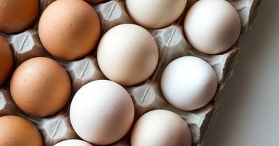 Neuer Trend: Die Eier-Diät